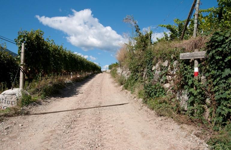 Der Frühlingeweg führt durch die Kranebitter Weinhänge.