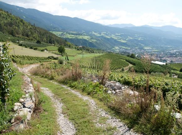 Sentiero del vino e delle mele Valle Isarco