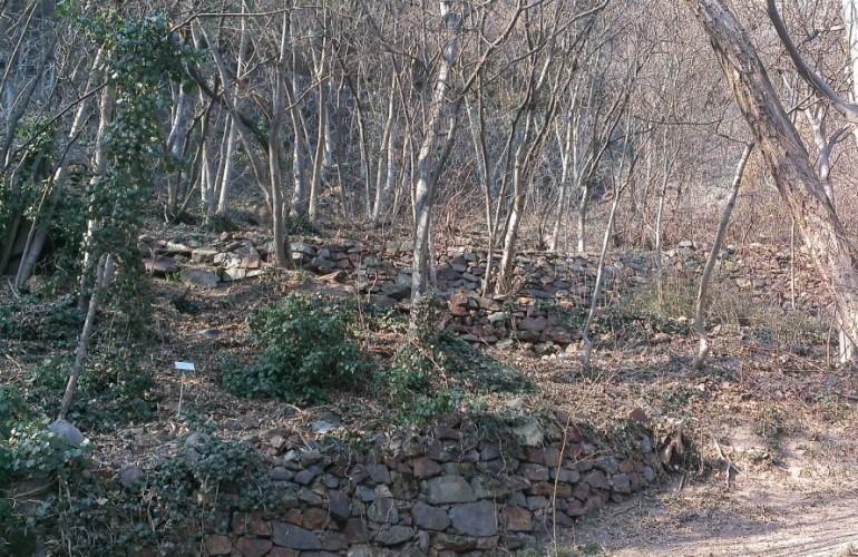 Typische Buschwald-Vegetation entlang des Weges